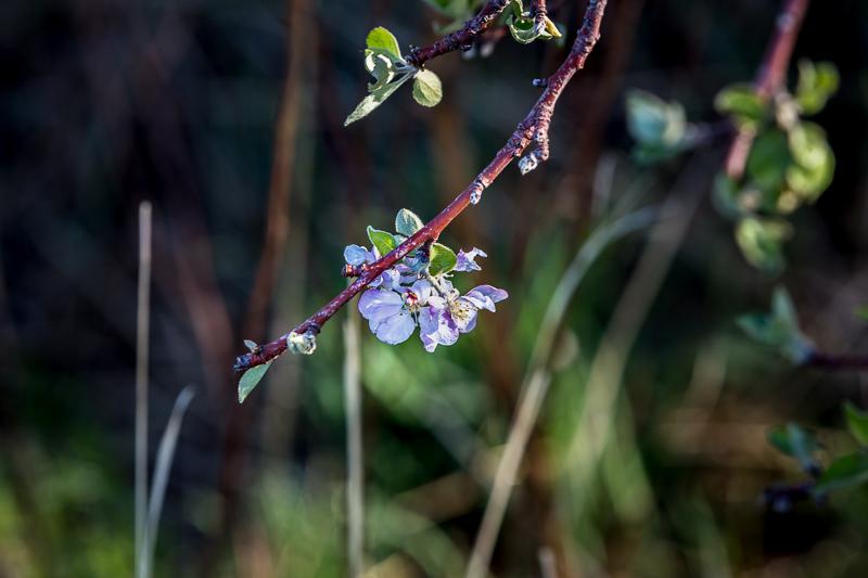 Ledoux wildflowers